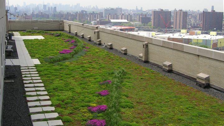 Projekty zielonych dachów